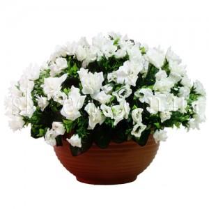 Квіти в надійних руках